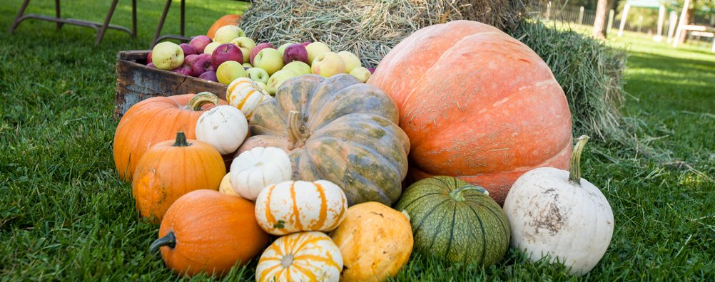 KC Fall Festival 2015 - Pumpkins
