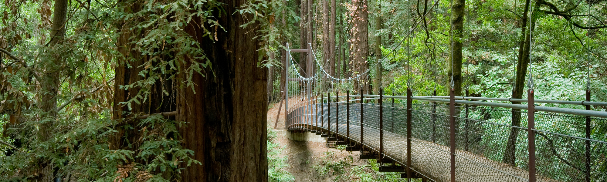 Redwood Bridge